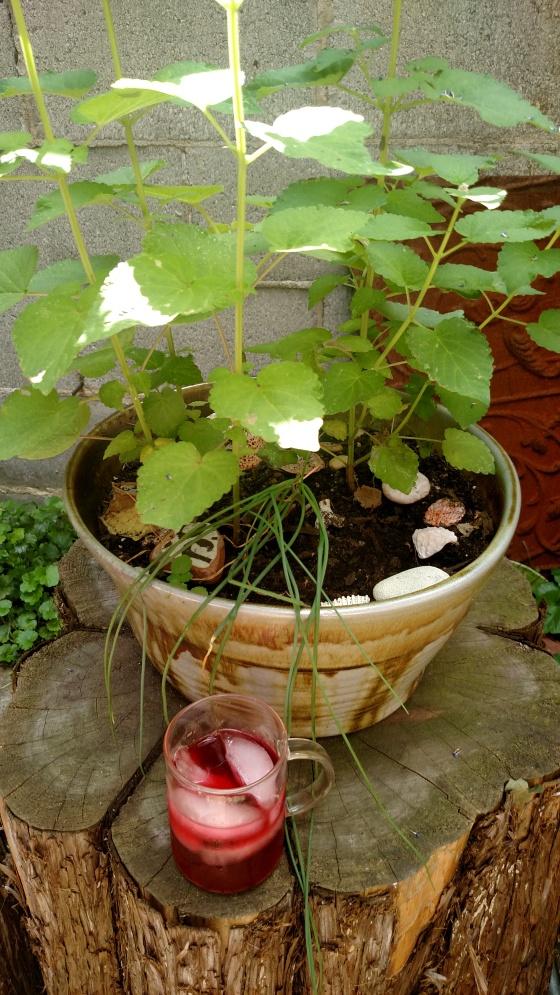 randomberryblendplant