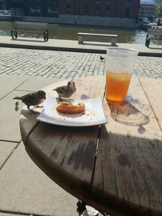 Birds4